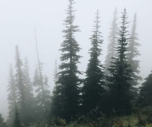 camping, fog, and foggy image