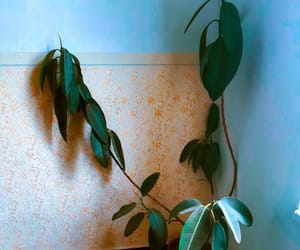 aesthetic, plant, and indoor plants image