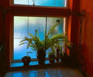 indoor plants, window, and plants image