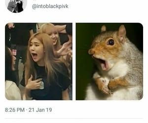 meme, mood, and rose image