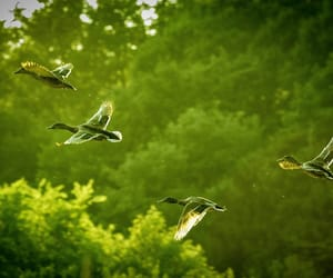 birds, green, and lime image
