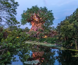 disney, sunset, and Animal kingdom image