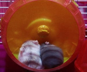 animals, cuddles, and cute animal image