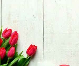background, red, and tulip image