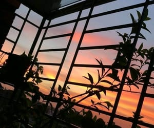sky, sunset, and plants image
