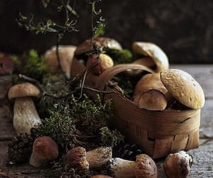 autumn, food, and forest image