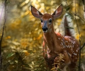 beautiful baby, out in the woods, and come to visit image
