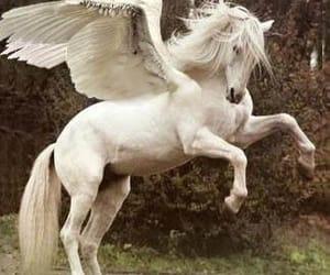 horse, pegasus, and fantasy image