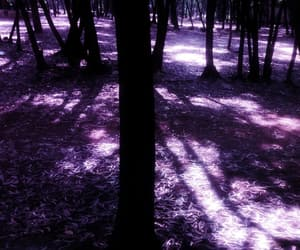 forests, into the woods, and purple aesthetic image