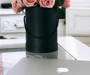 apple, beauty, and flower image