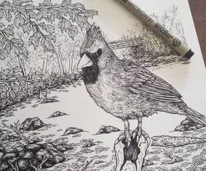 art, artwork, and cardinal image