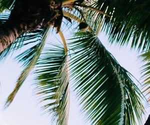 Hot, mauritius, and palm image