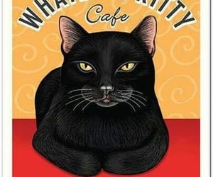 cafe, cat, and serve image