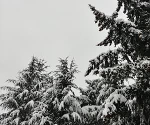 aesthetic, freezing, and nature image