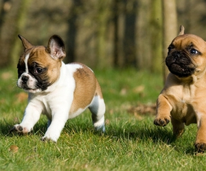 dog, dogs, and puppies image