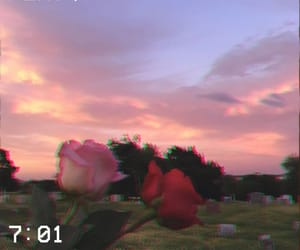 aesthetic, roses, and pink image