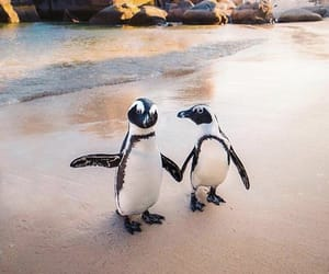 penguin, animal, and beach image
