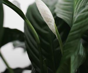 green, planta, and hoja image