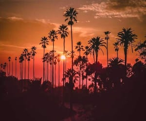 los angeles, palm trees, and summer image