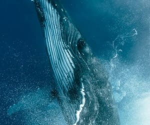 ocean, whale, and nature image