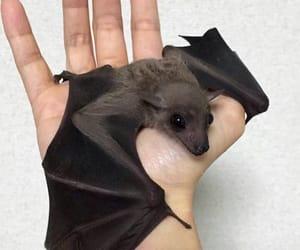 animals, bat, and cute image