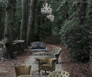 forest, vintage, and photography image