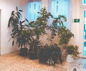 aesthetic, plants, and indoor image