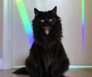 aesthetic, black cat, and rainbow image