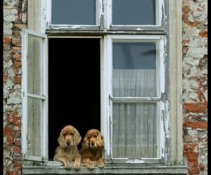 dog and window image