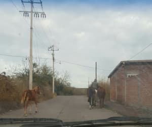 horses, mexico, and rider image