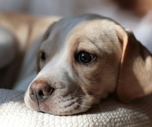 puppy, animals, and dogs image