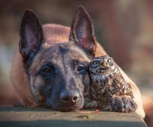 dogs, owls, and cute image