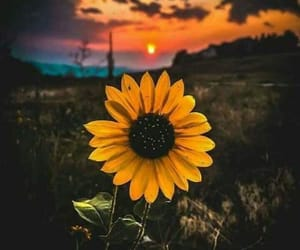 flowers, sunflower, and flores image