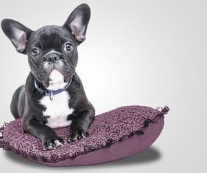 dog grooming lafayette and pet grooming lafayette image