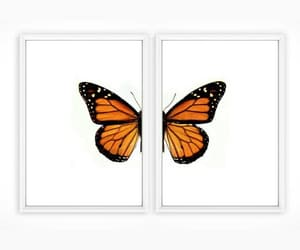 butterflies, typography, and butterfly image