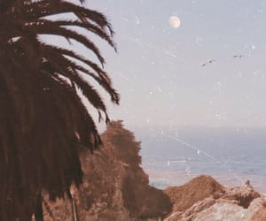 background, beach, and daisy image