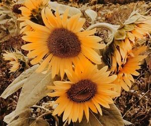 alternative, daisy, and happines image