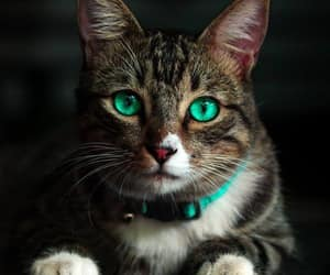 cat, pets, and photography image