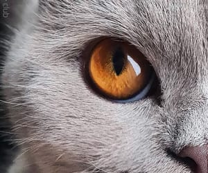 animals, brown, and eyes image
