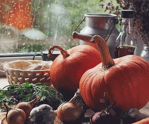 gif, rain outside, and country harvest image