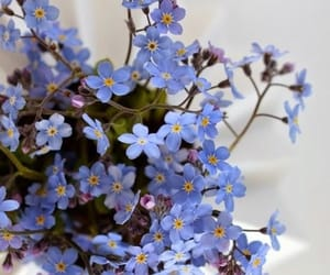 background, blue, and blue flowers image