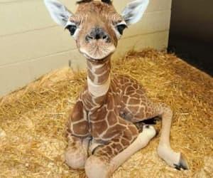 animals, giraffes, and puppies image