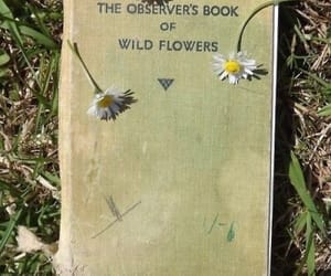 flowers, book, and nature image