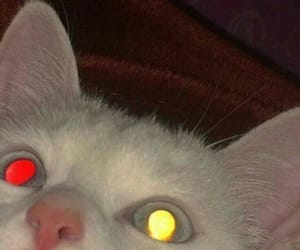 cat, demon, and eyes image