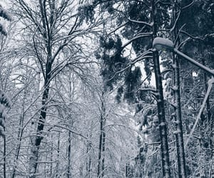 cold, sweden, and white image