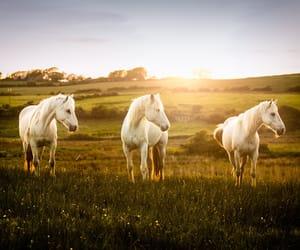 equine, irish, and pony image