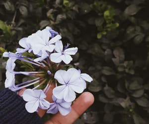 azul, flores, and flowers image