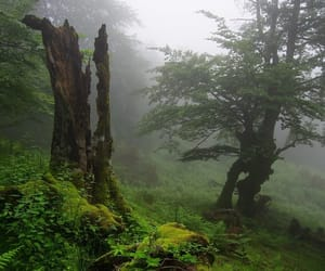 damp, ferns, and forest image
