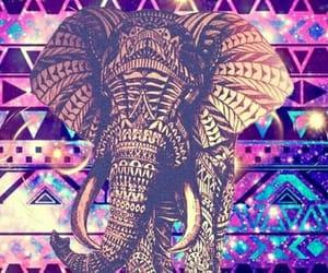 elefante image