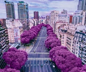 purple and roxo image